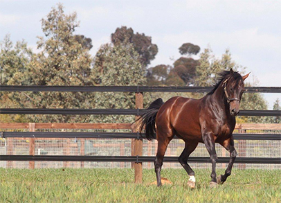 Horserail Fencing, available in Australia, is impact resistant, won't splinter or warp, and comes with a 20-30 year limited manufacturer warranty.